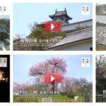京都いいとこ桜動画